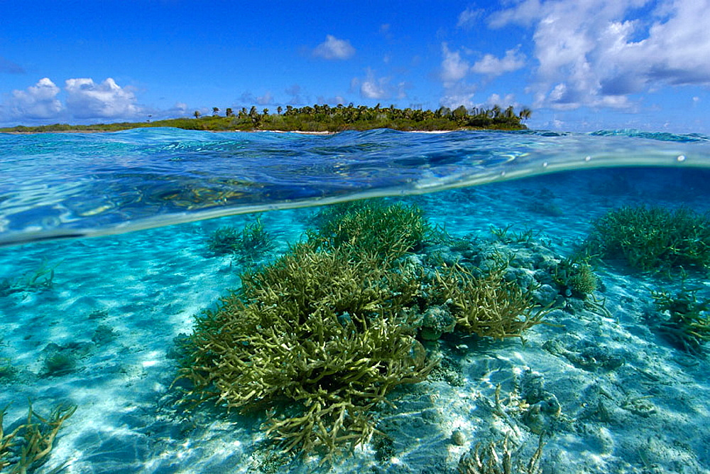 Split image of staghorn coral, Acropora sp., and uninhabited island, Ailuk atoll, Marshall Islands, Pacific