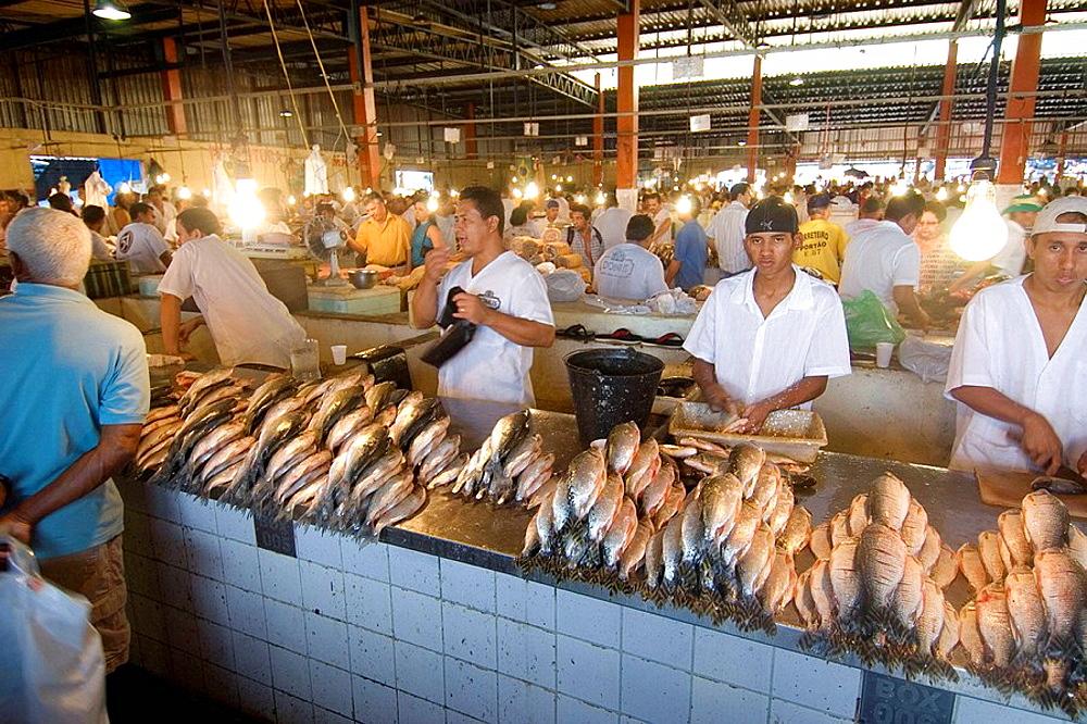 Fish Market, Manaus, Amazonas, Brazil