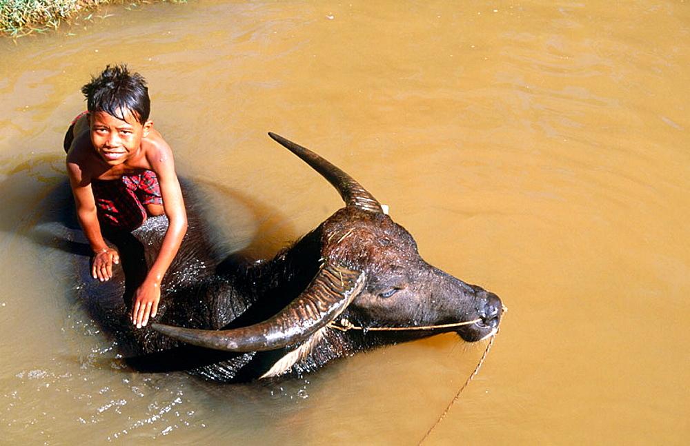 Boy with water buffalo, Inle Lake, Shan State, Myanmar