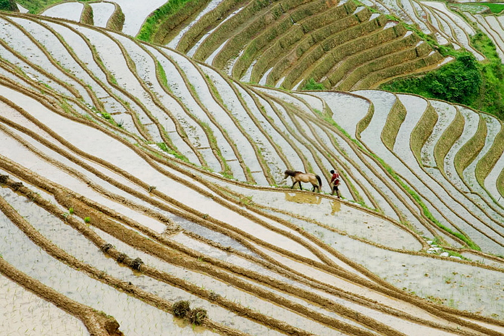 Terraced rice fields, Guilin, Longsheng, Guangxi Province, China