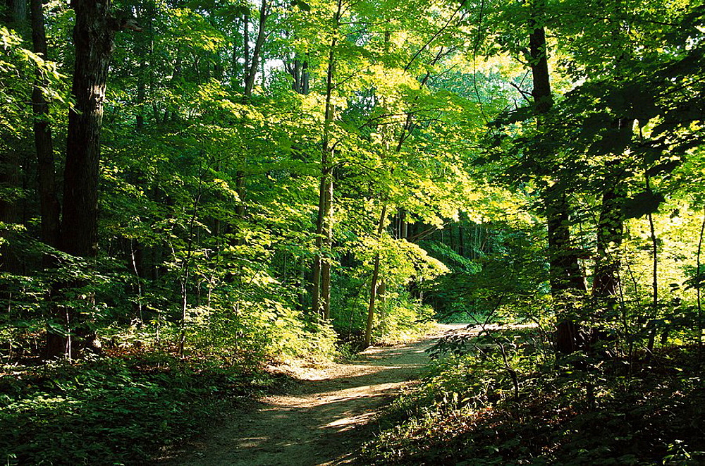 Wooded pathway, Sleepy Hollow State Park, Michigan, USA