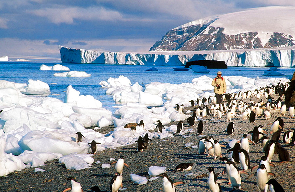 Tourist enjoying Adelie Penguins, Antarctic peninsula