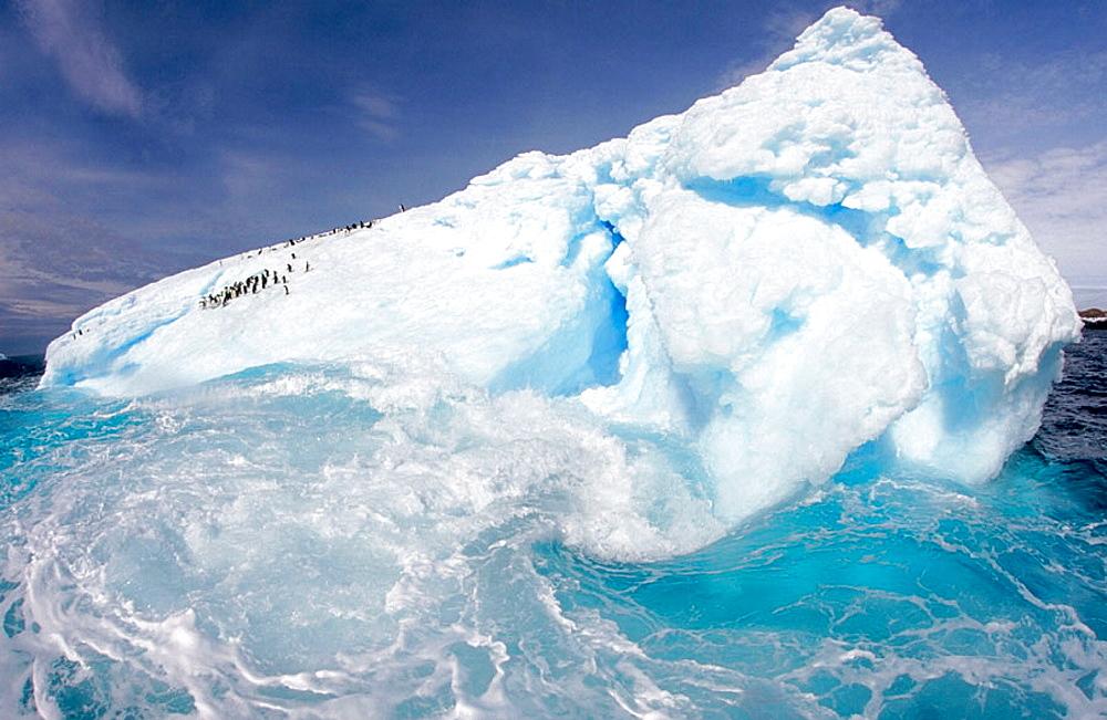 Adelie Penguins (Pygoscelis adeliae), Eroded Iceberg, Dumont d'Urville, Antarctica