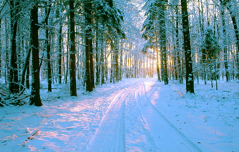 Path through winter forest