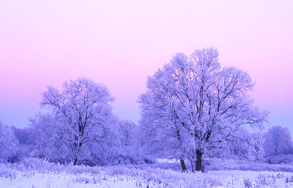 Trees at dusk in winter, Germany