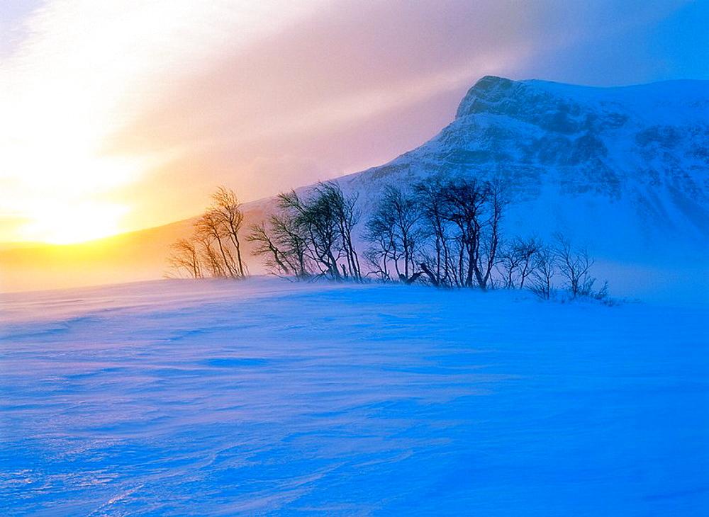 Mountain birches in snowstorm, Tjakkeli mountain in background, Sarek National Park, Lapland, Sweden - 817-12084