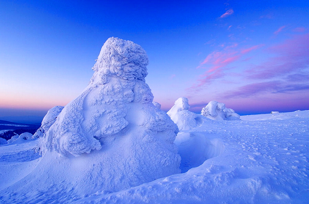 Snow_covered Norway spruce trees (Picea abies) at sunrise, Brocken (Mountain), National Park Hochharz, Saxony_Anhalt, Germany, Europe