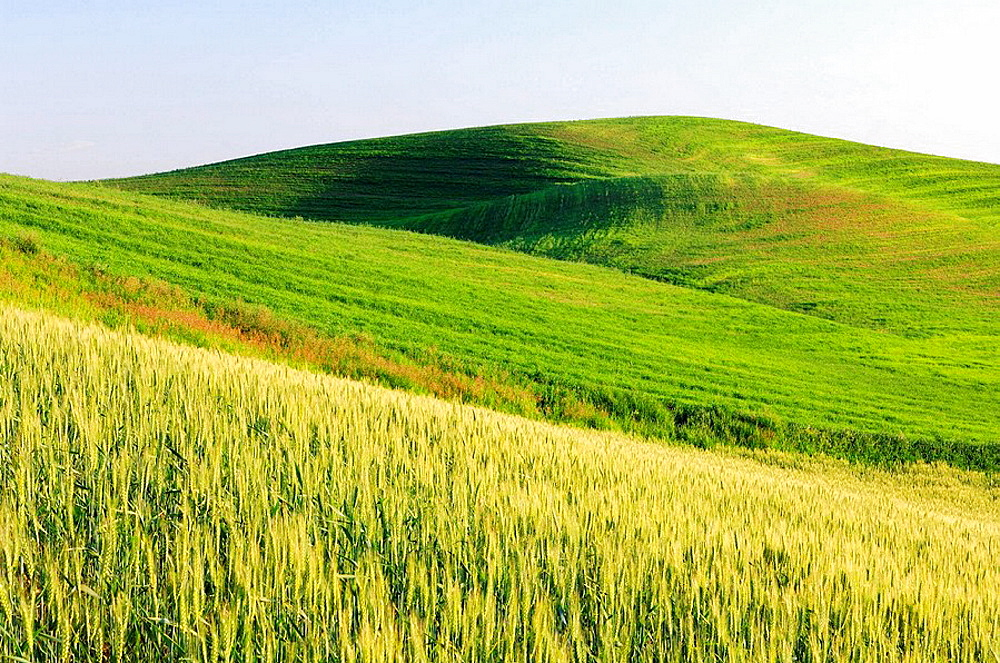 Green fields near Colfax at the Palouse Region The verdant Palouse stretches across more than 2 million acres in eastern Washington and western Idaho Near Colfax, Palouse, Whitman County, Washington State, USA, America
