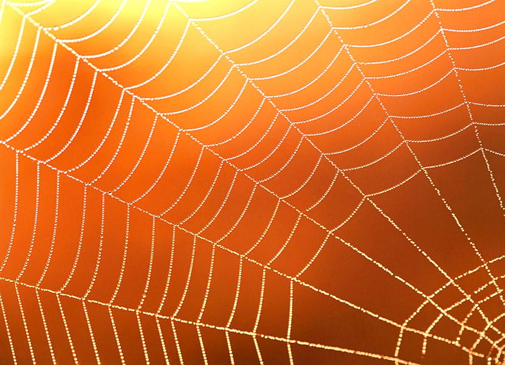 Spider web - 817-12103
