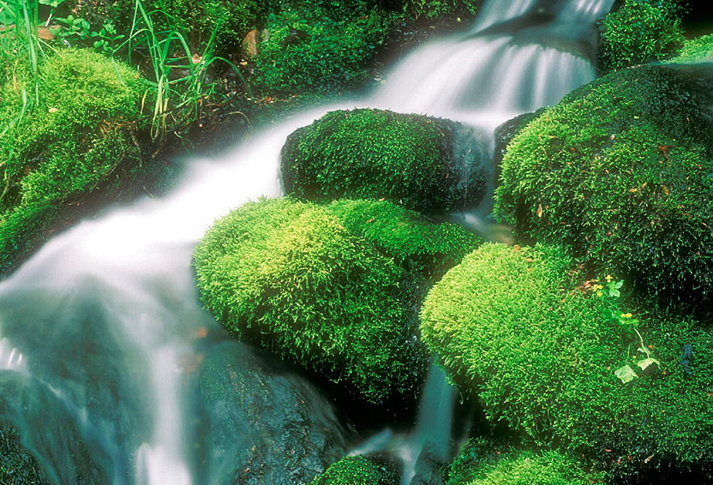 Moss-covered boulders and waterfall in Roaring Fork, Appalachian mountain stream, Great Smoky Mountains NP, TN, USA