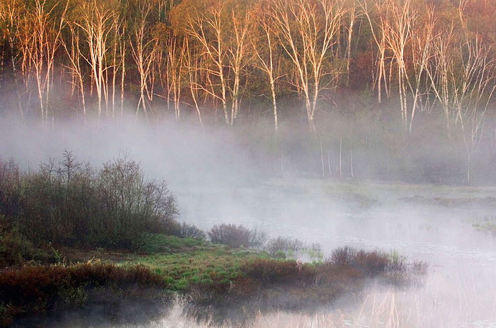 Misty spring beaver pond at dawn, Walden, Ontario, Canada