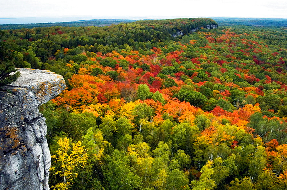 Deciduous forest from viewpoints along the Cup and Saucer Trail, Manitoulin Island, Ontario, Canada