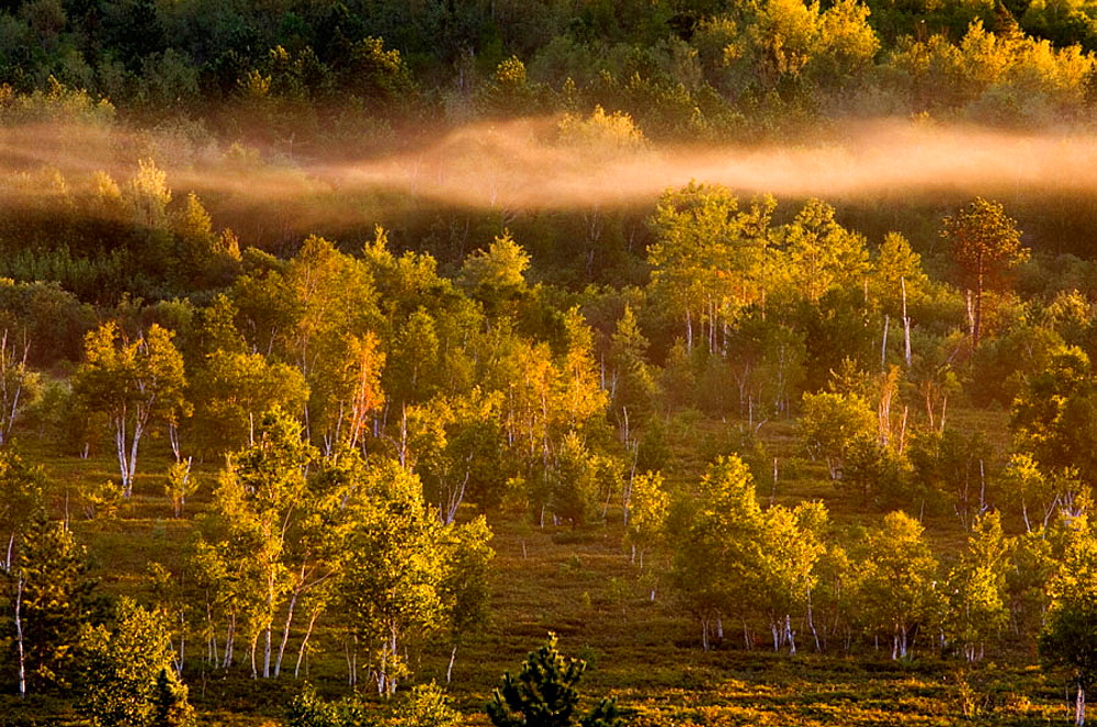 Morning mists in valley with leatherleaf bogs, pines and birches, Ontario