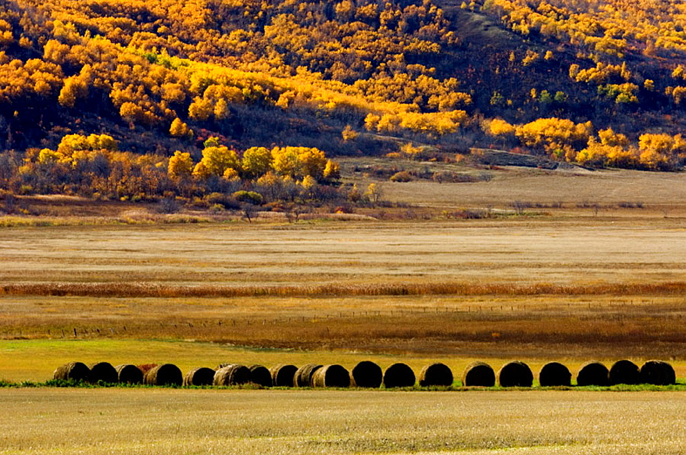 Hay rolls in the Qu'Appelle Valley agricultural scenic, Saskatchewan