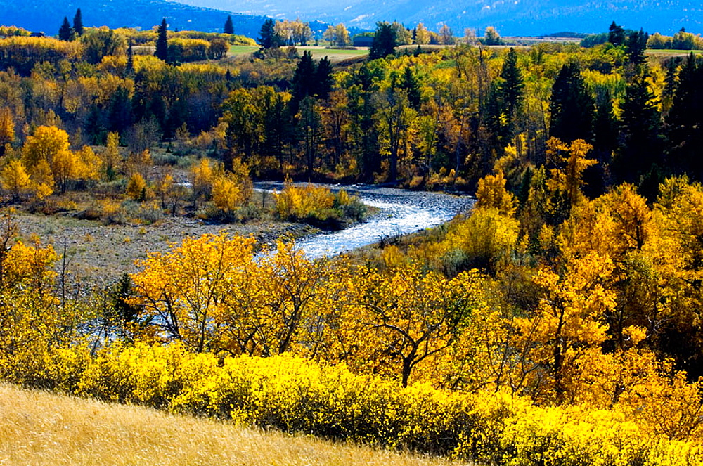 Blakiston River valley with autumn aspens and cottonwoods, Waterton National Park, Alberta