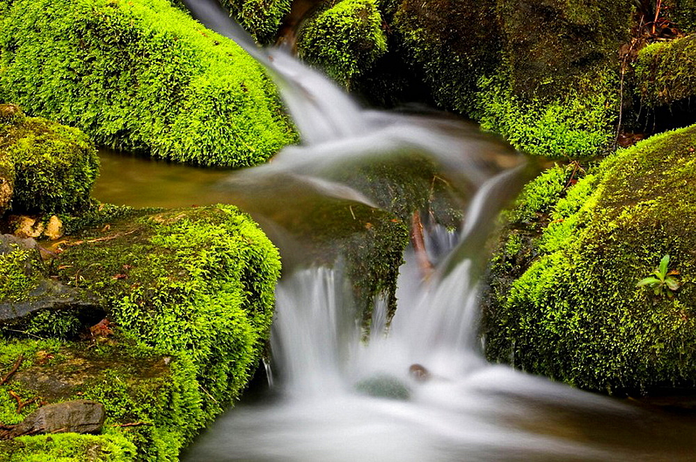 Mossy cascade in mountain stream, Great Smoky Mountains National Park, Tennessee, Appalachian, USA