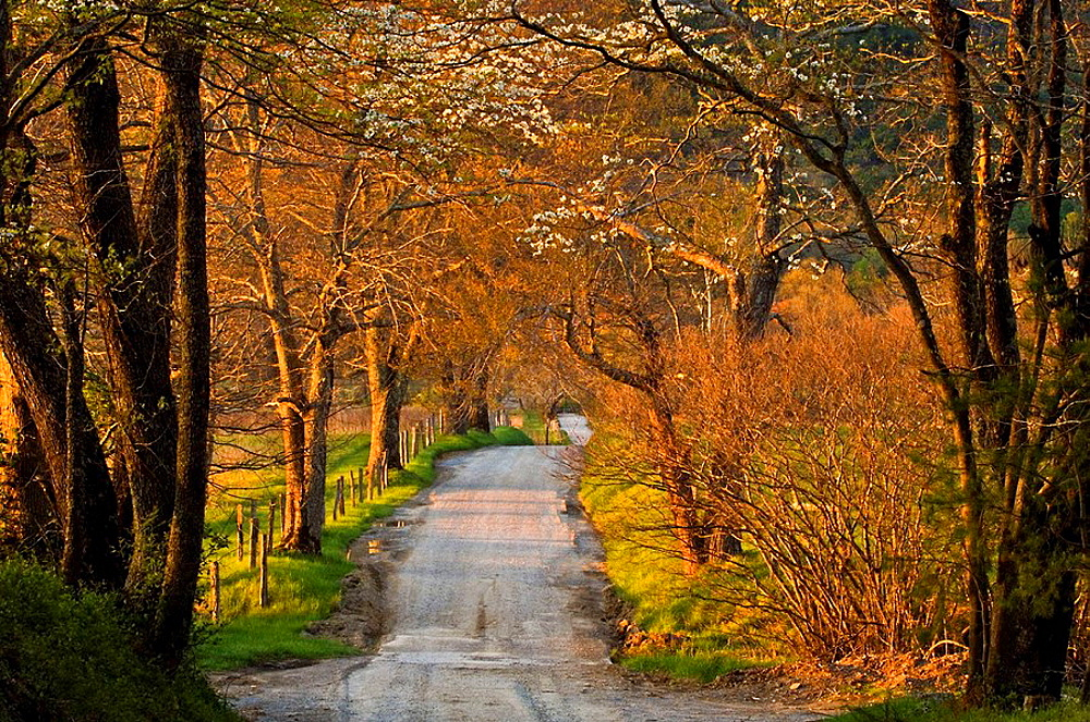 Sparks Lane in evening light in Cades Cove, Appalachian, Great Smoky Mountains National Park, Tennessee, USA