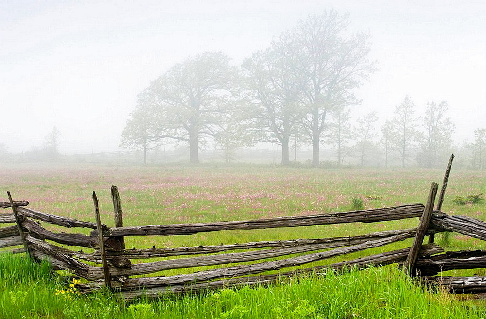 Cedar split-rail fence with prairie smoke and distant oak trees in light fog