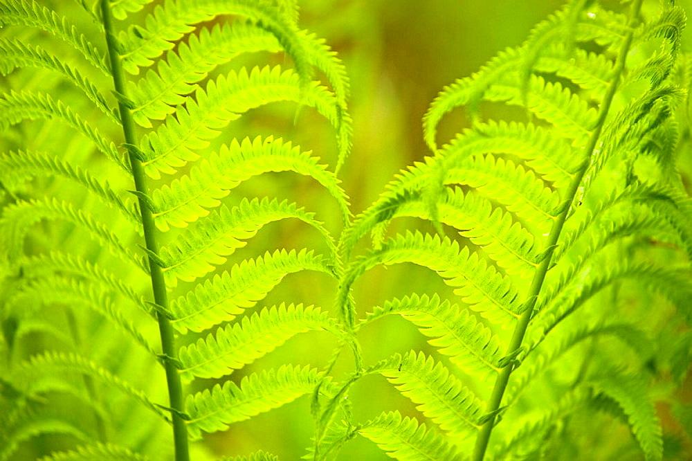Woodland fern fronds