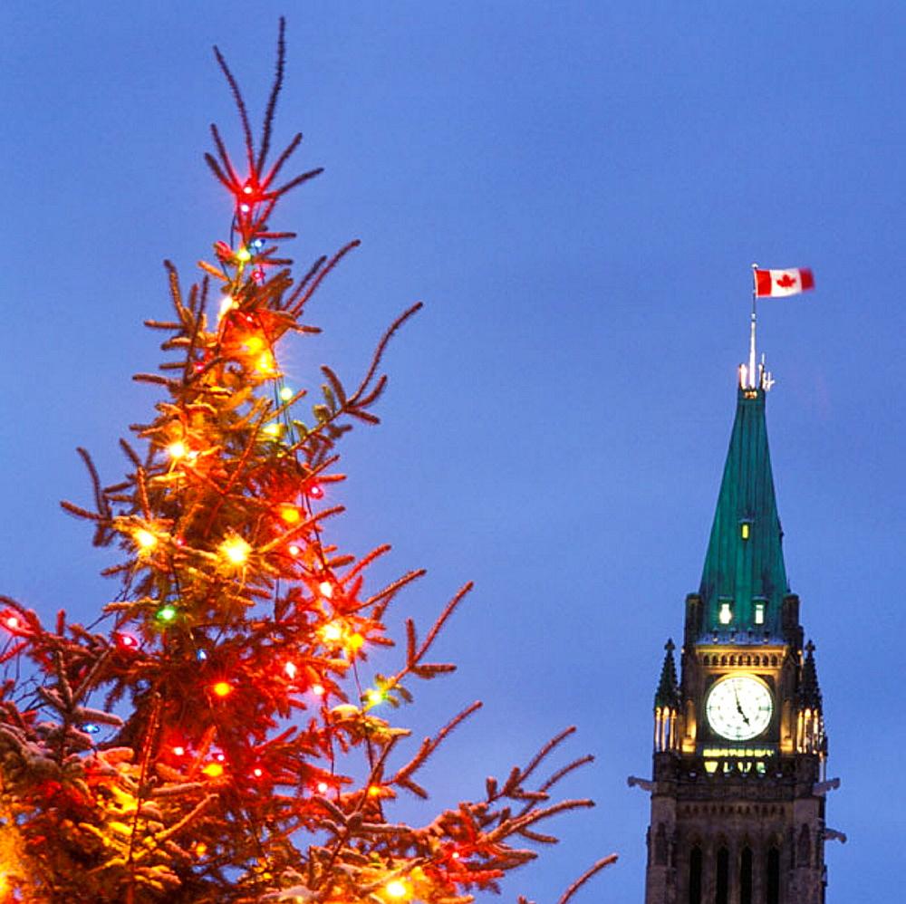 """Christmas Trees Ottawa: High Quality Stock Photos Of """"ottawa"""""""
