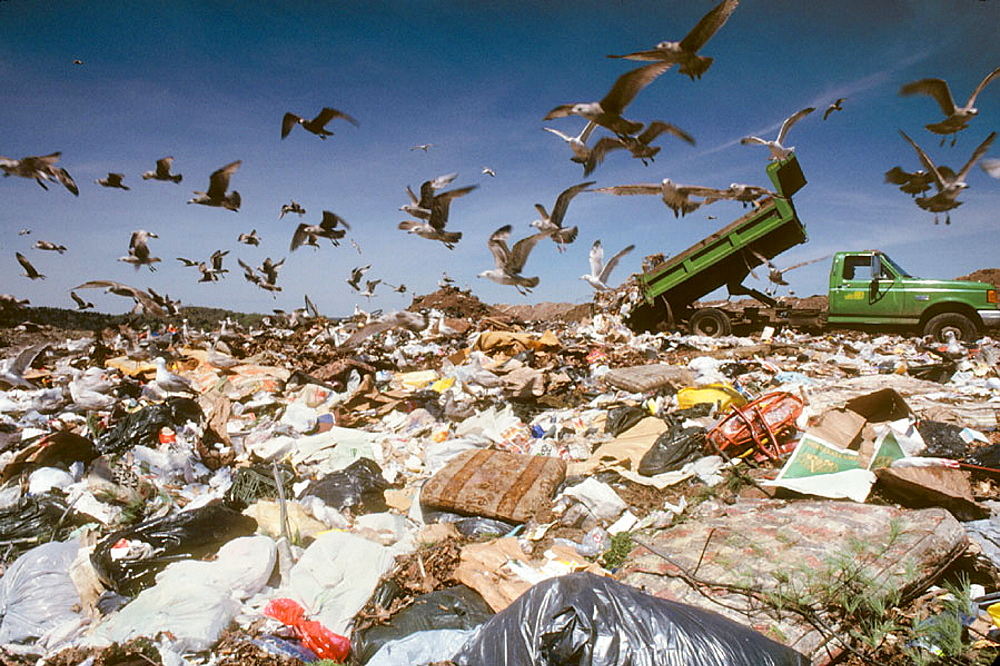 Garbage dump with seagulls and truck, New Haven, Connecticut, USA - 817-12700
