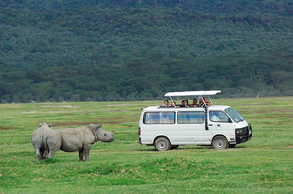 Safari tourists and White Rhinocerosses (Ceratotherium simum) at Lake Nakuru, Kenya