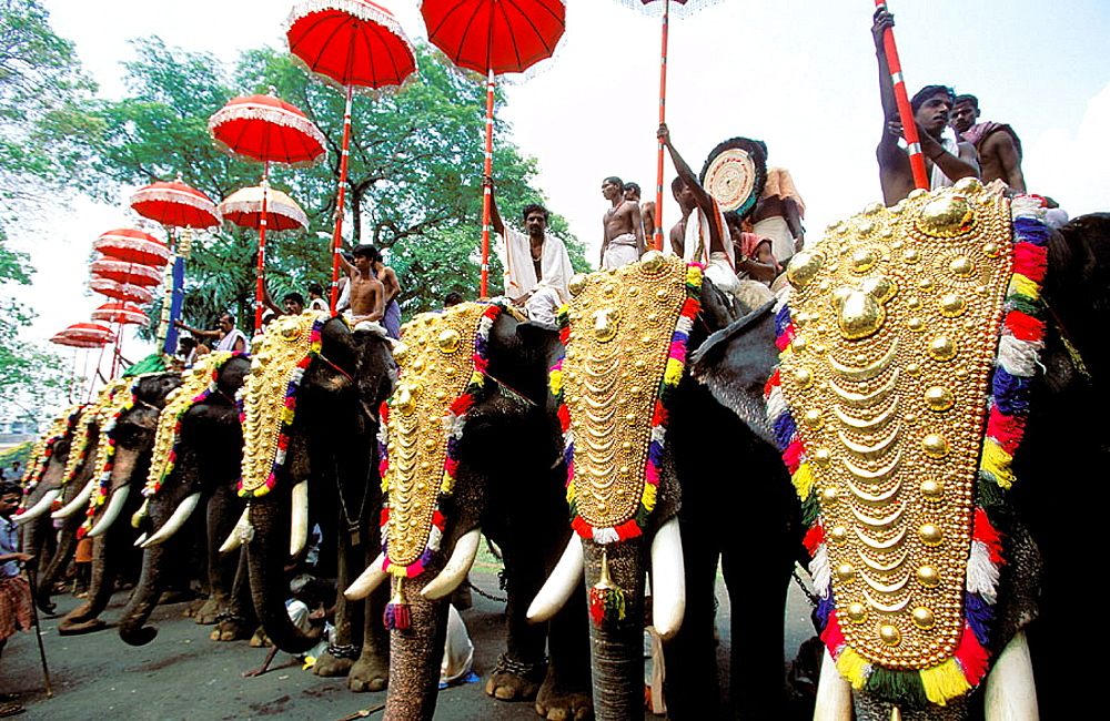 Elephants at annual Pooram festival, Trichur, Kerala, India