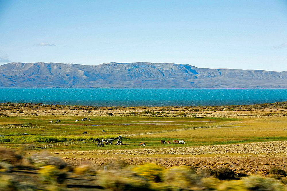 Landscape near El Calafate area with Lago Argentino on the background, Santa Cruz province Patagonia Argentina