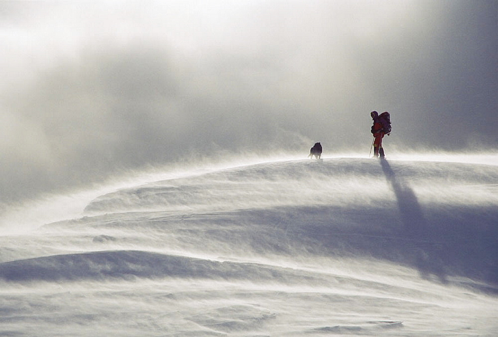 Skier with labrador dog in blowing snow, Lewis Pass, South Island, New Zealand