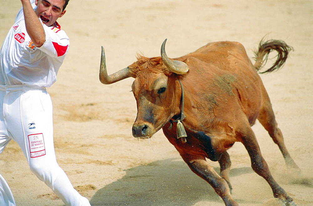 'Recortadores' bloodless form of bullfighting, Pamplona, Navarre, Spain