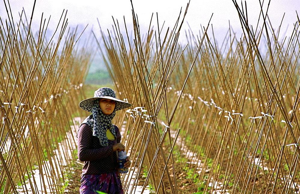 Woman on a field, Xishuangbanna, Yunnan, China