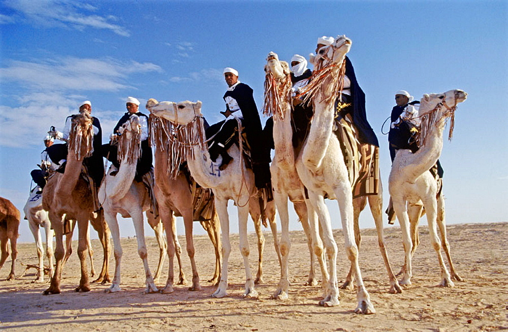 Bedouin men at Sahara festival, Douz, Tunisia - 817-137877