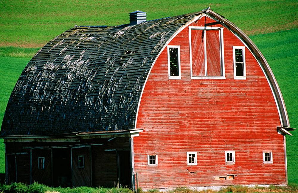 Red barn in wheat field, Palouse region, Whitman County, Washington, USA