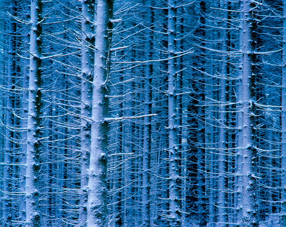 Trees in winter frost in the mountains - 817-145339