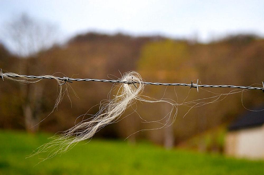 Sheep wool in a fence, Euskadi, Spain