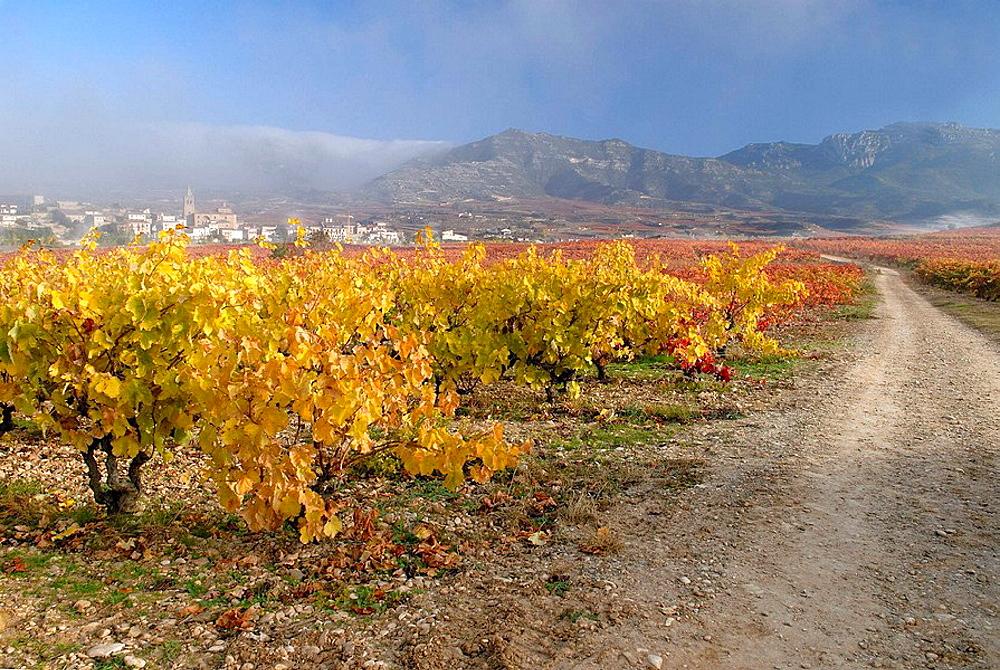 Vineyards at fall, Rioja Alavesa, Euskadi, Spain
