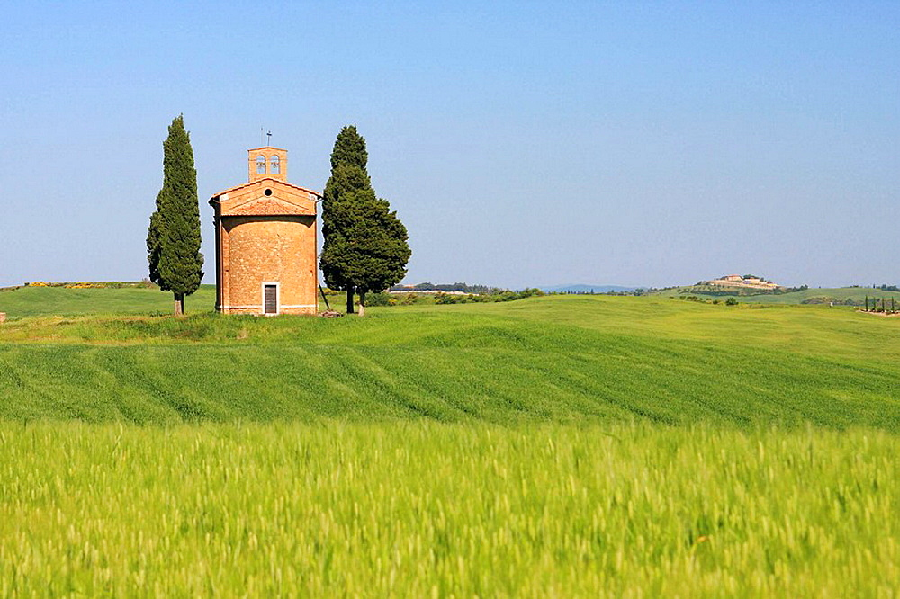 Chapel Vitaleta, Cypress, Italian Cypress, Cupressus sempervirens, cypresses, hill countryside, agricultural landscape, spring, Val d' Orcia, Tuscany, Italy