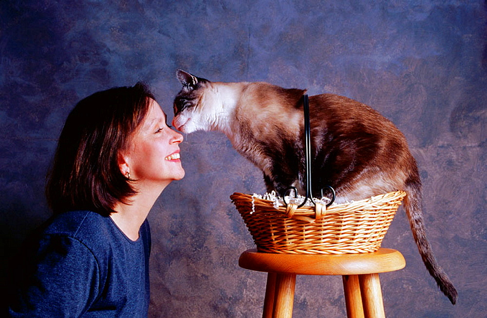 Cat licking womans face