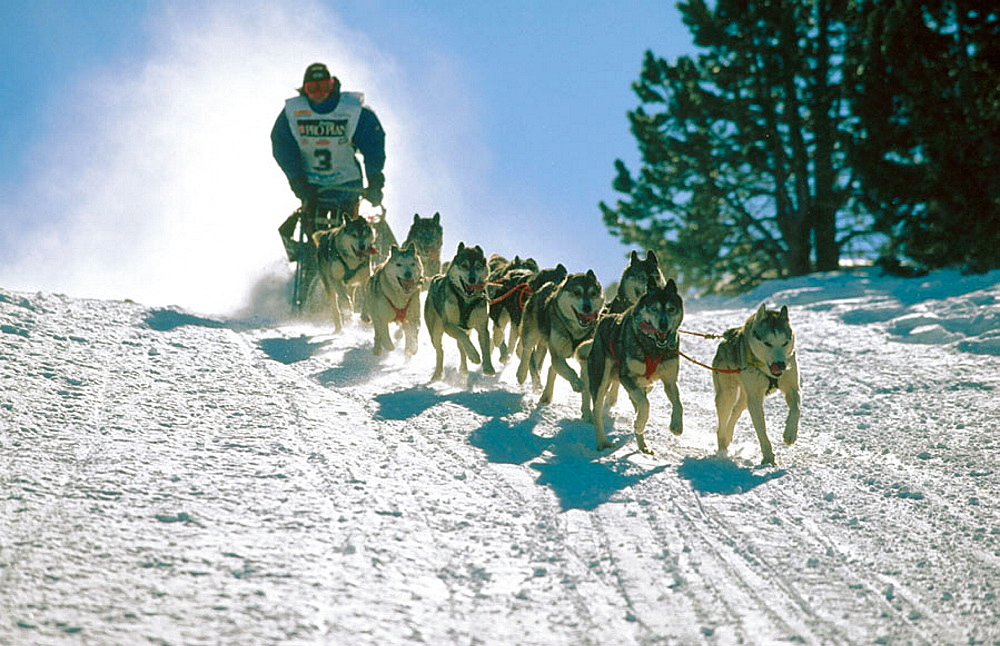 Pirena, Sled dog race in the Pyrenees going through Spain, Andorra and France, Catalonia, Spain