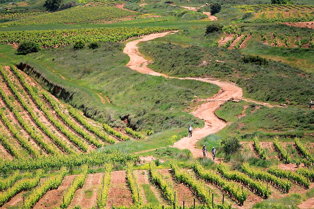 Camino de Santiago through vineyards in La Rioja