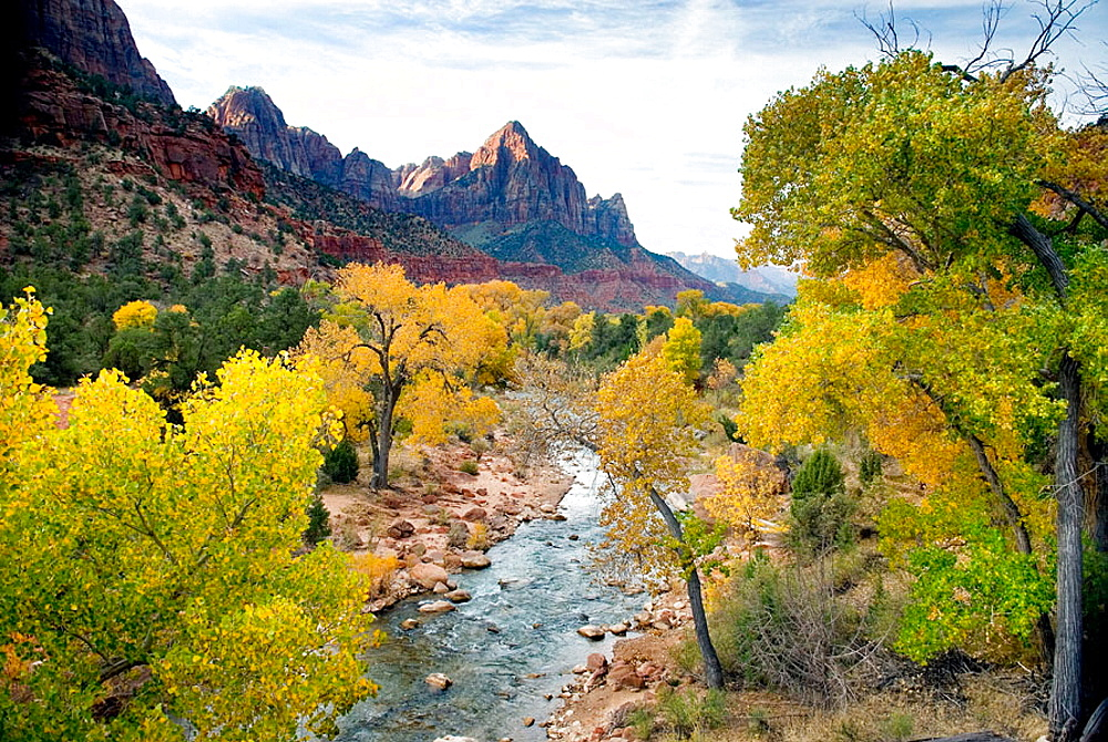 Autumn along the Virgin River, The Watchman in the distance, Zion National Park, Utah, USA