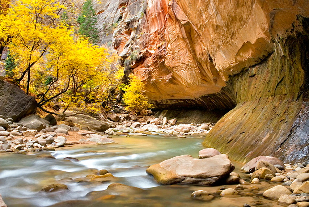The Virgin River flowing through the Zion canyon narrows, Zion National Park, Utah, USA