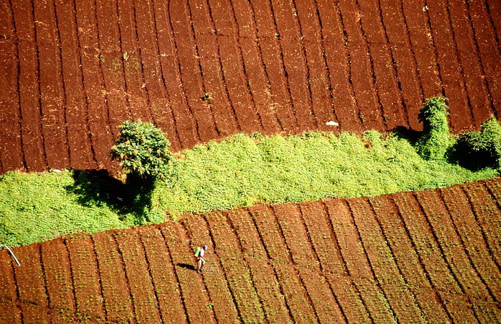 Potato fields, Chiriqui province, Panama