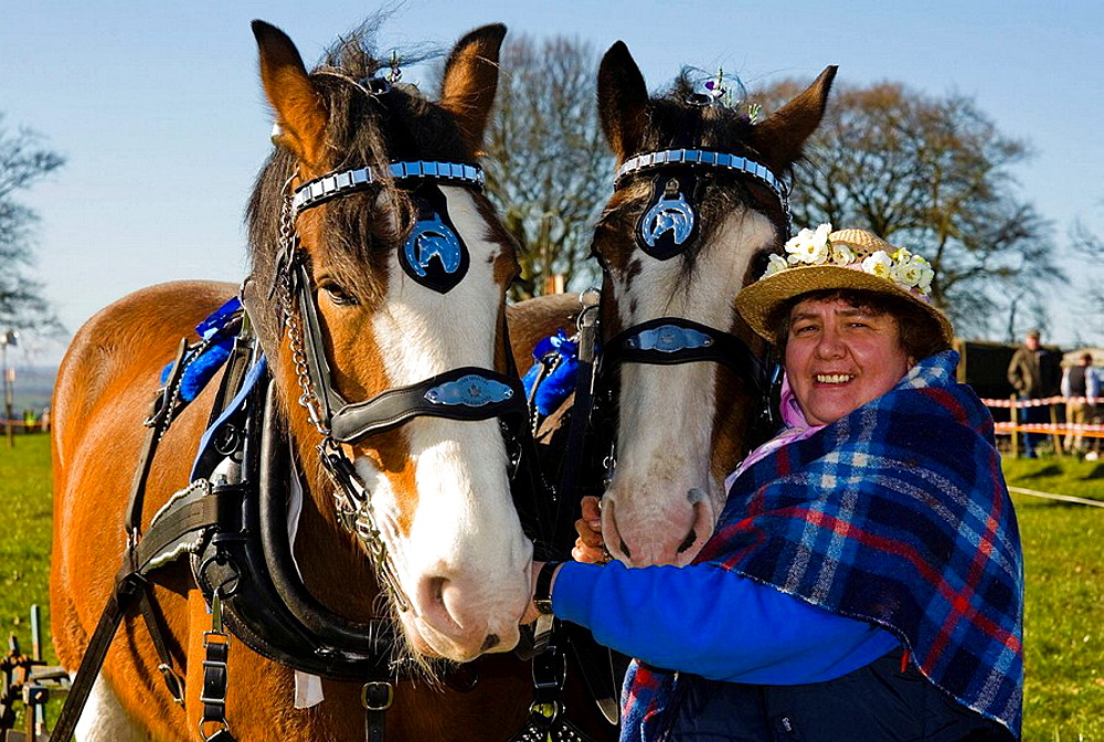 Jane Harkness with two Clydesdale horses