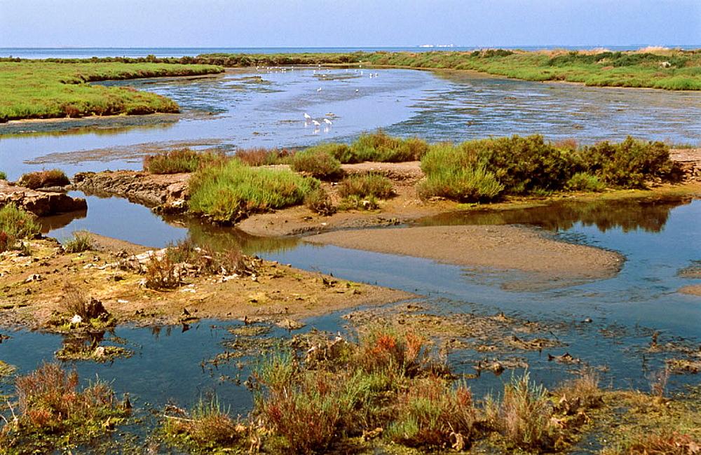 Delta del Ebro Natural Park, Tarragona, Spain.