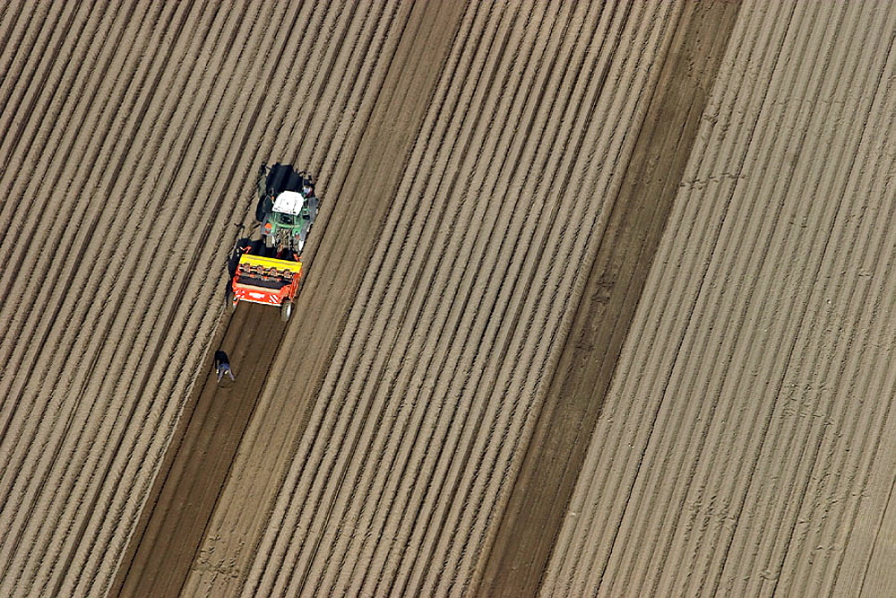 Tractor on the potato field, spring time, Skv•ne, Sweden - 817-161783