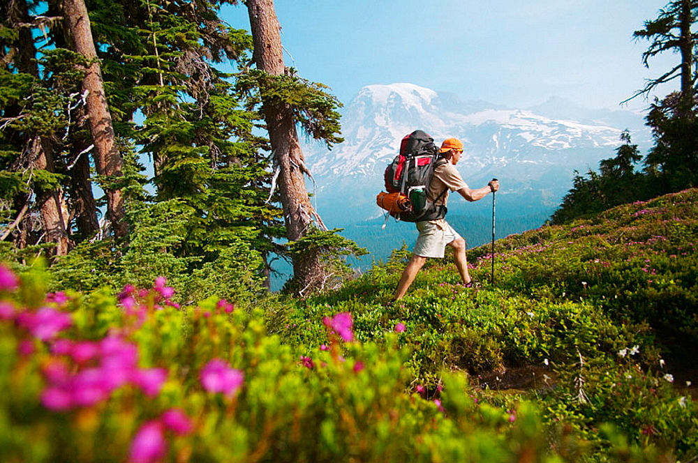 A man hiking through flowers in the Tatoosh range near Mount Rainier, WA.