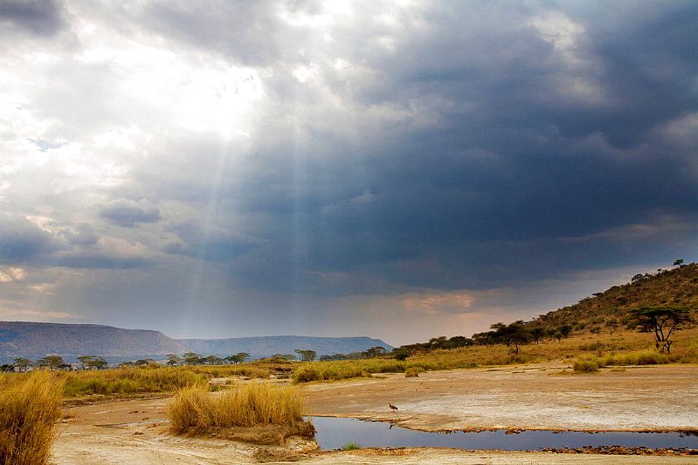 Serengeti National Park, Tanzania - 817-165473