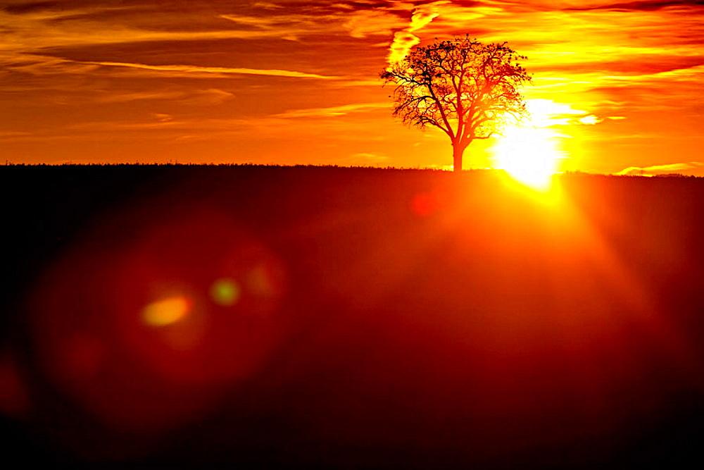 Tree at sunrise, Baden-Wurttemberg, Germany