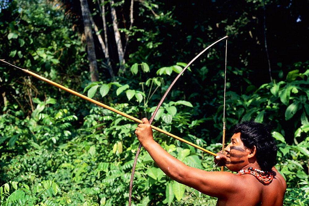 Satere-Maue tribes man uses bow and arrow to hunt for food to feed his family in the Amazon. - 817-170097